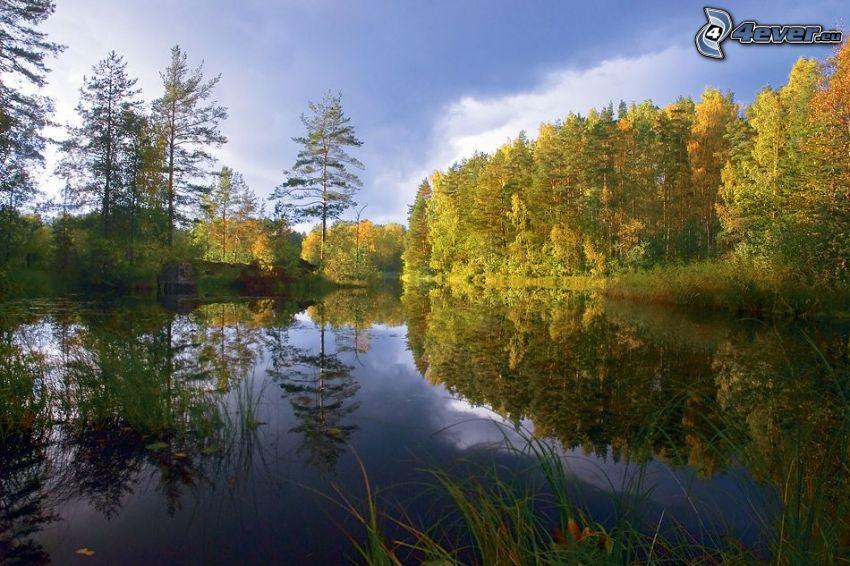 sjö i skogen, färggranna träd