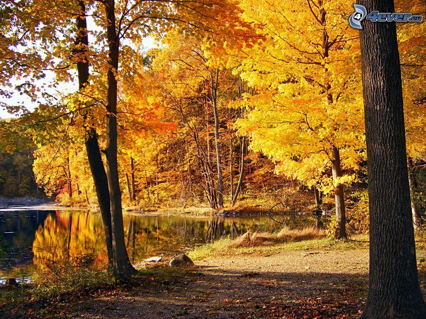 sjö i skogen, gul höstskog, trottoar