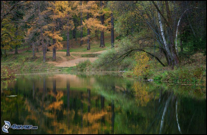 sjö i skogen, gula träd