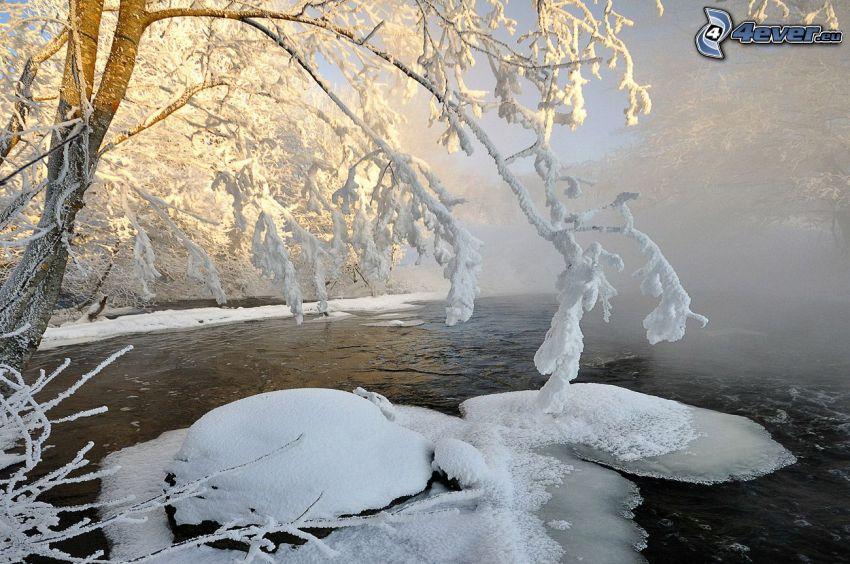 sjö i skogen, isflak, snöklädda träd, markdimma