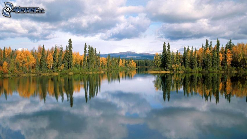 sjö i skogen, moln, spegling, gula träd, lugn vattenyta