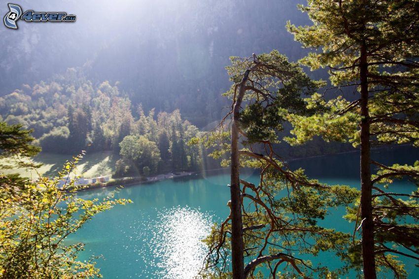 sjö i skogen, skog, träd, sol
