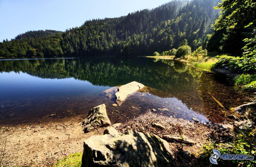 sjö i skogen, spegling
