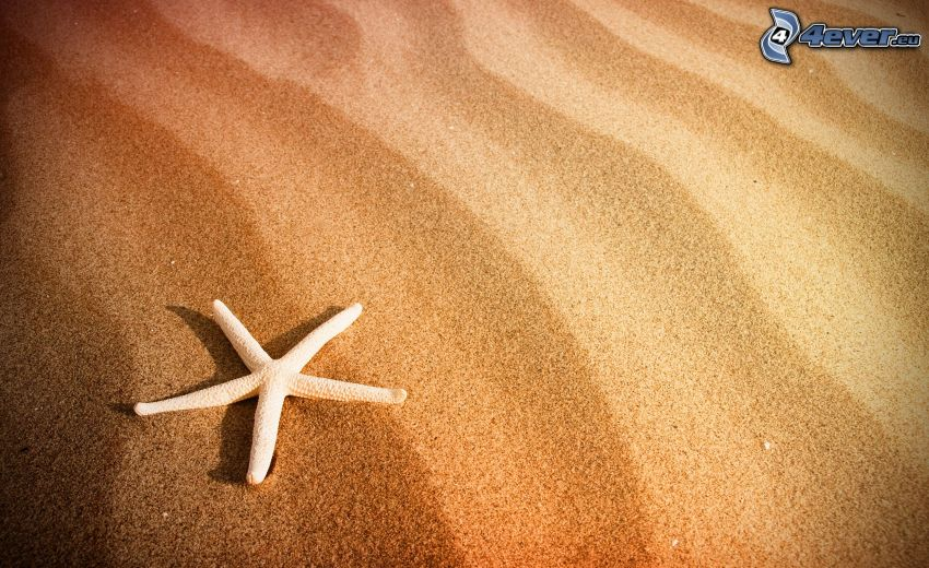 sjöstjärna, sand