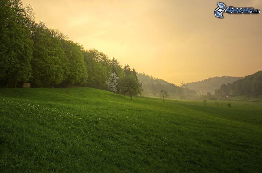 skog, äng
