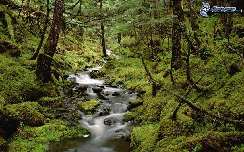 skog, bäck, grönska, mossa