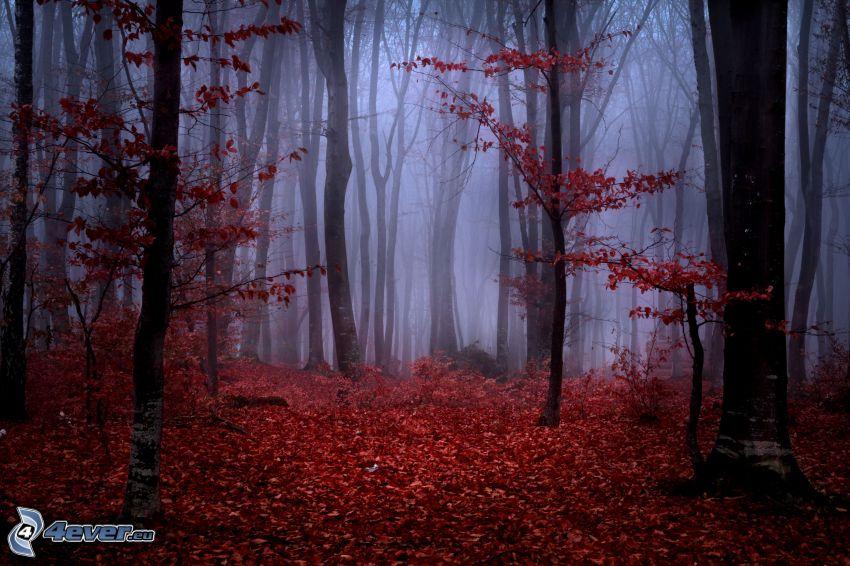 skog, dimma, höstlöv