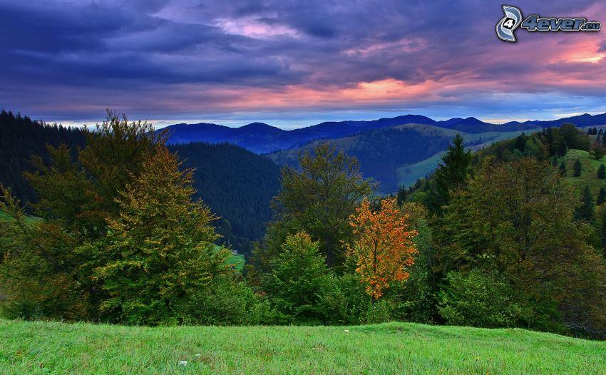 skog, kullar, moln