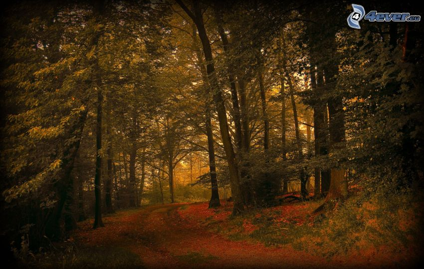 skog, skogsväg