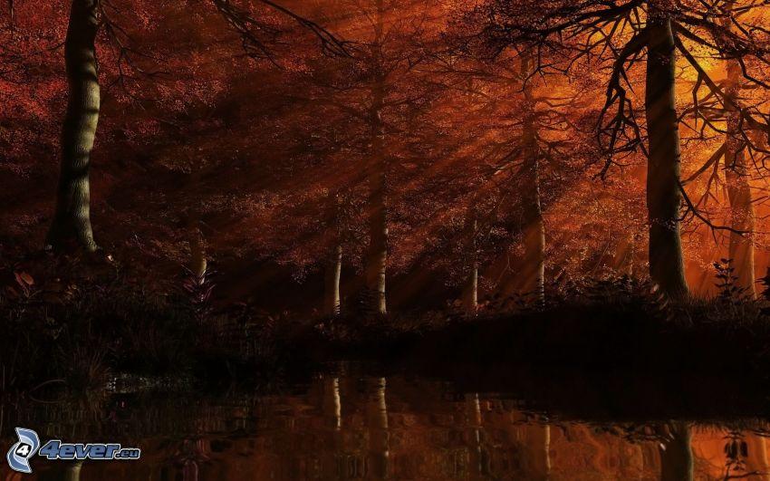 skog, solstrålar, flod