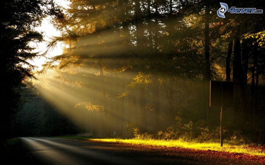 skog, solstrålar, skogsväg
