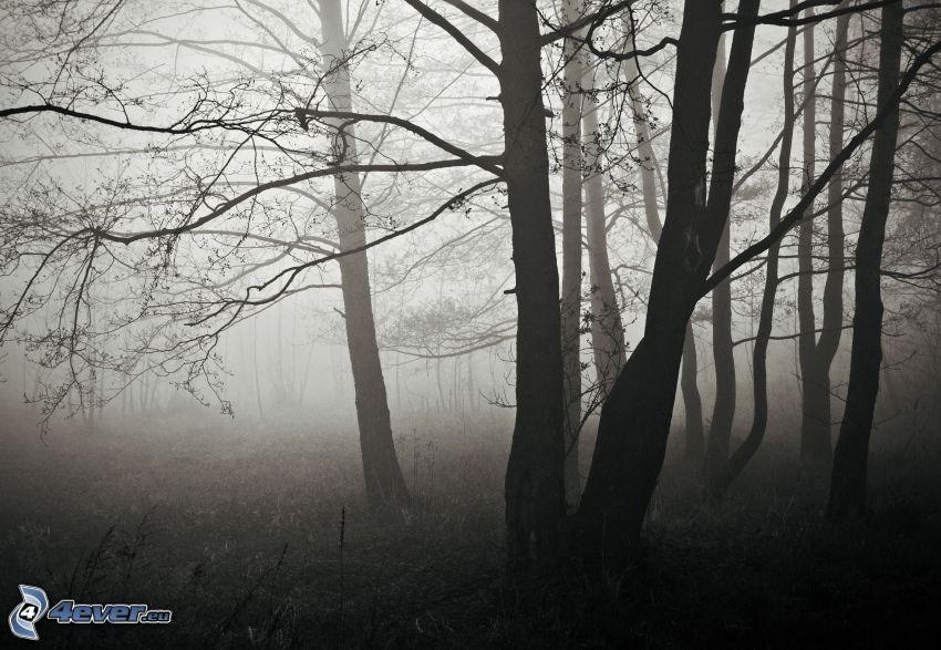 skog, träd, dimma