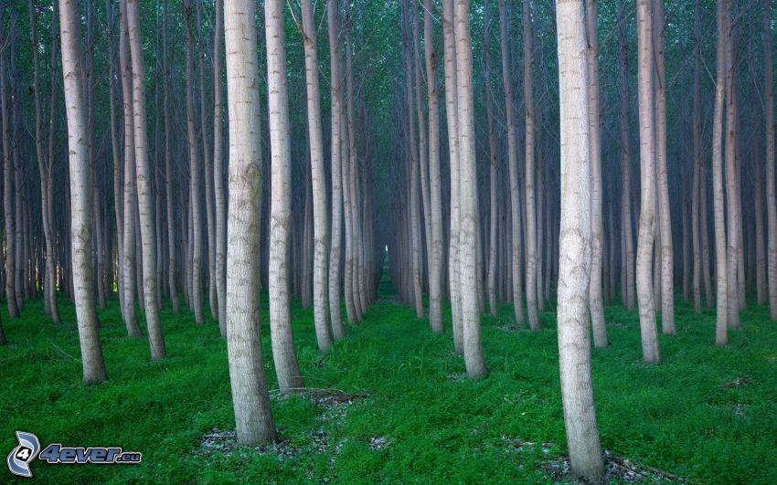 skog, träd