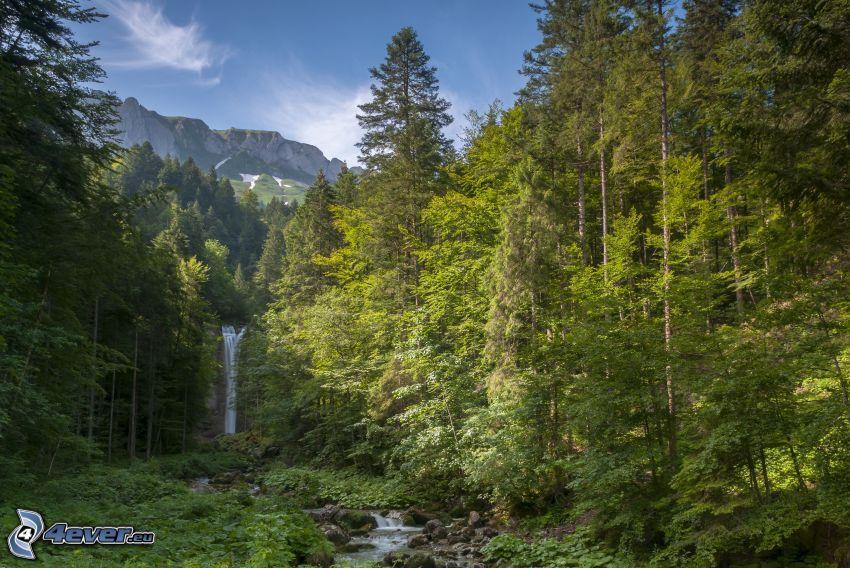 skog, vattenfall, berg