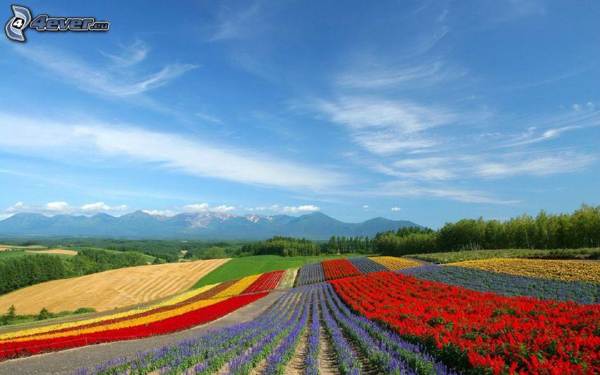 skogar och ängar, berg, färgglada blommor