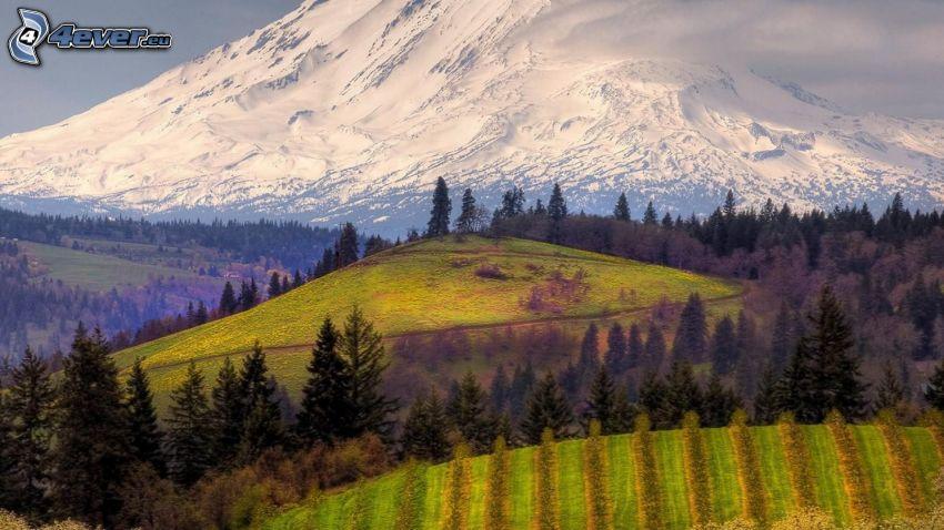 skogar och ängar, Mount Adams, snöigt berg