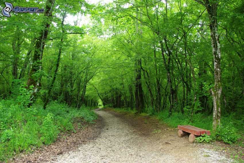 skogsstig, bänk, grön skog
