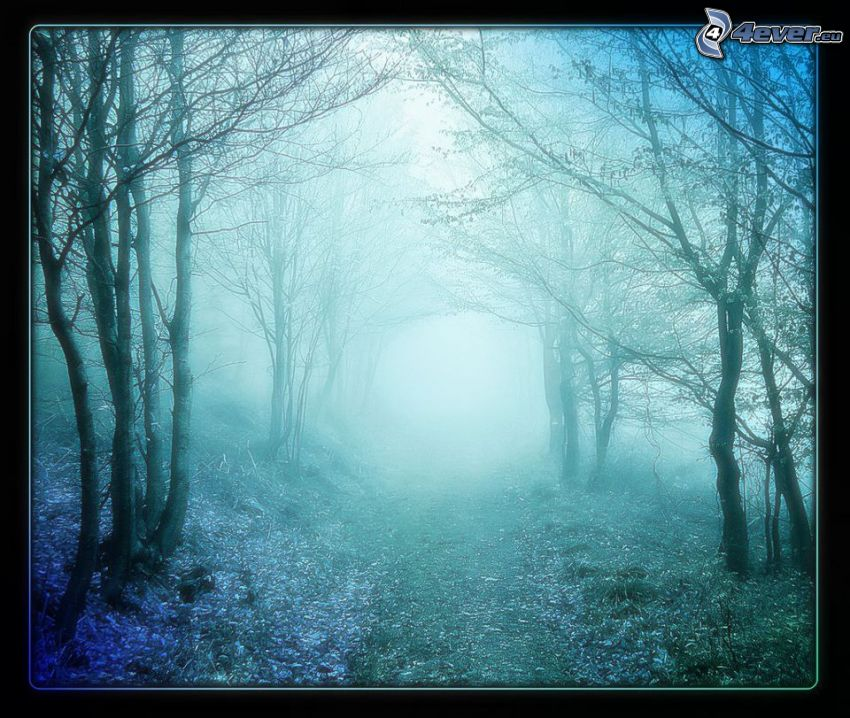 skogsstig, dimma