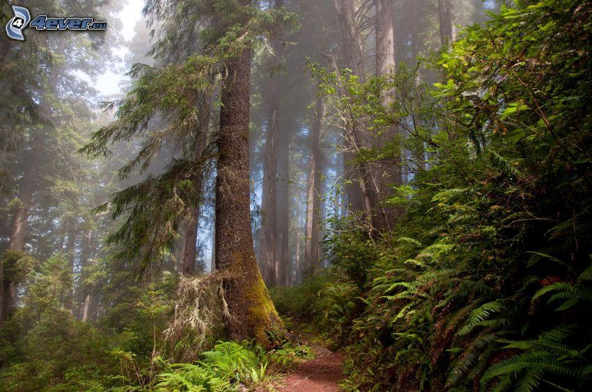skogsstig, träd, grönska, vandringsled