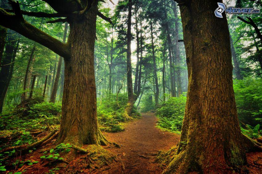 skogsstig, träd