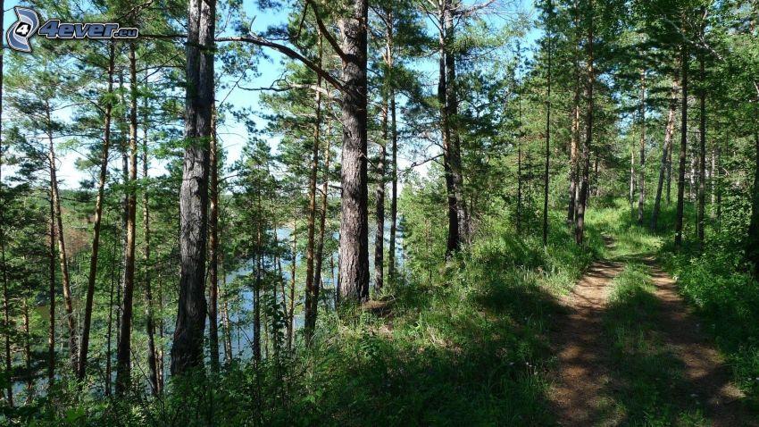 skogsväg, flod