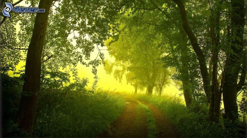 skogsväg, gröna träd