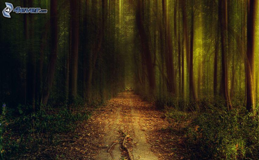 skogsväg, grönska