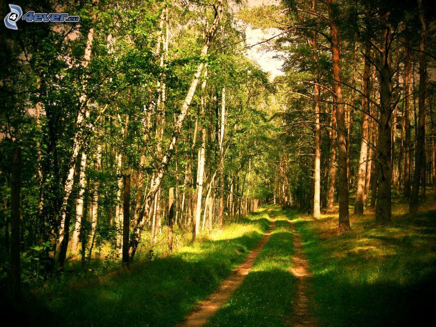 skogsväg, grönt gräs, skog