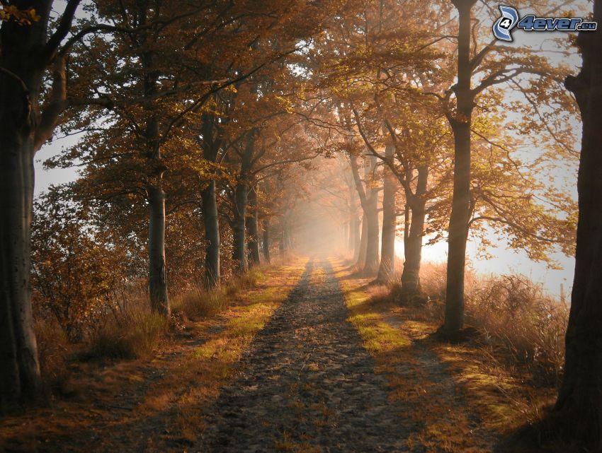 skogsväg, gula träd