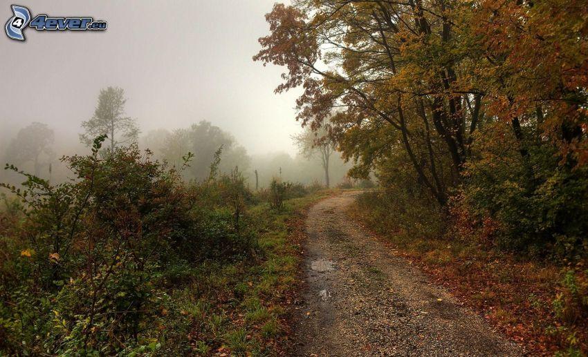 skogsväg, höstträd, dimma