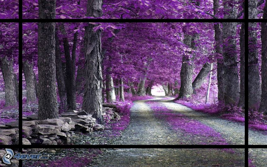 skogsväg, lila träd