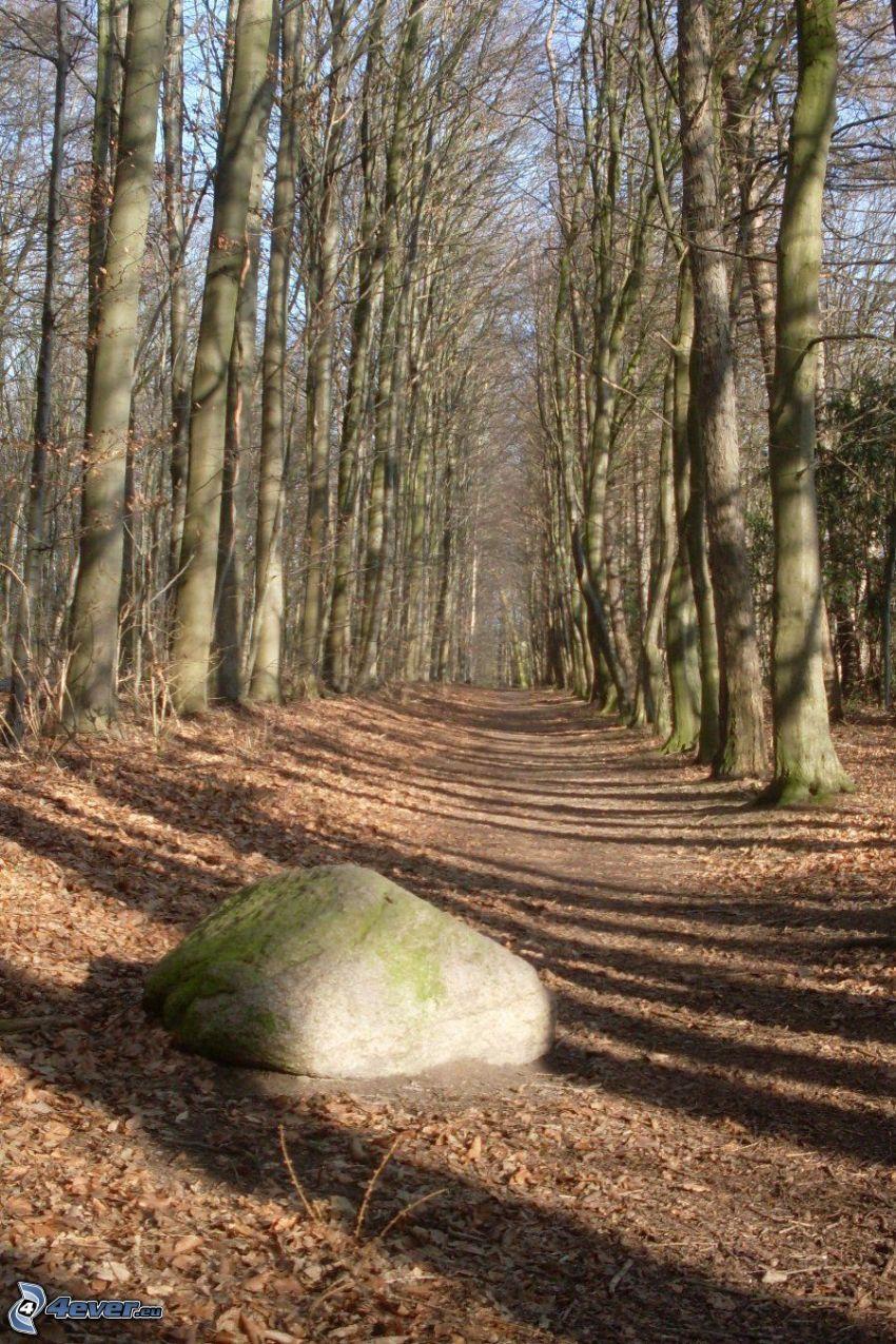 skogsväg, lövträd, klippa