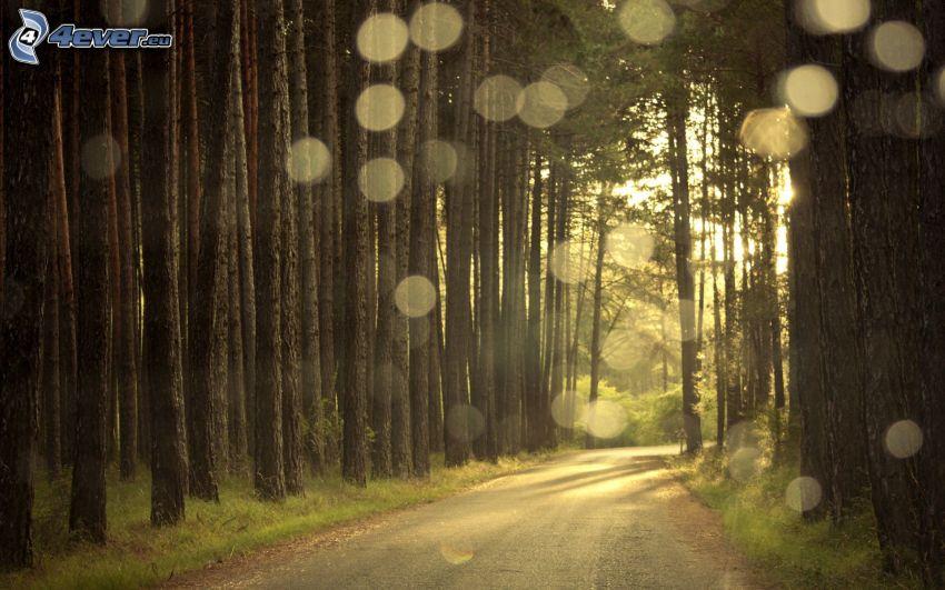 skogsväg, ringar, trädstammar