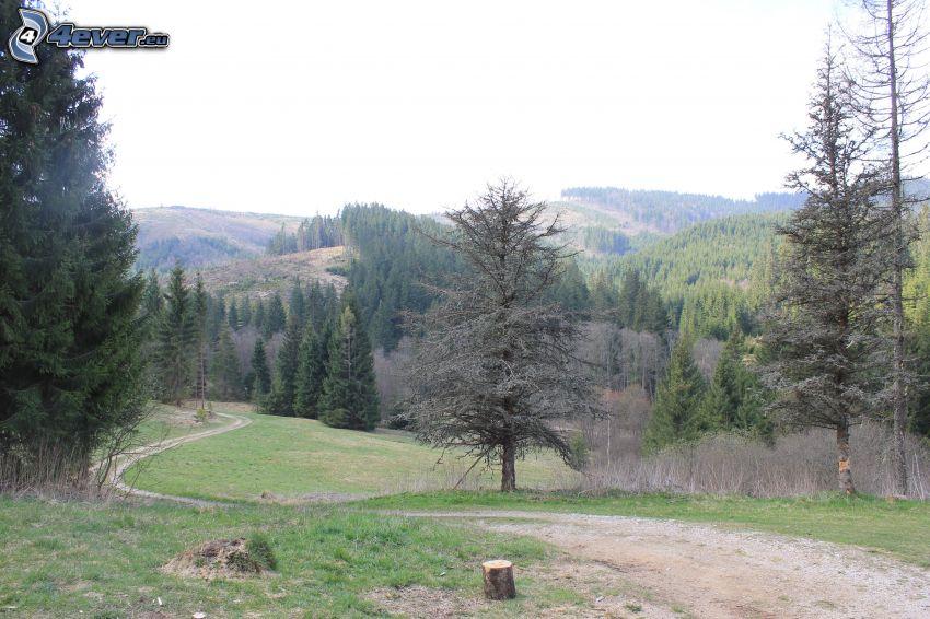 skogsväg, skog, kullar