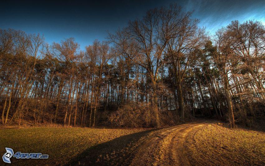 skogsväg, skog, mörk himmel