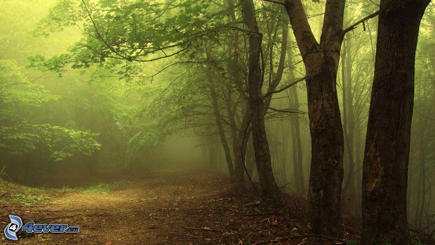 skogsväg, skog, träd