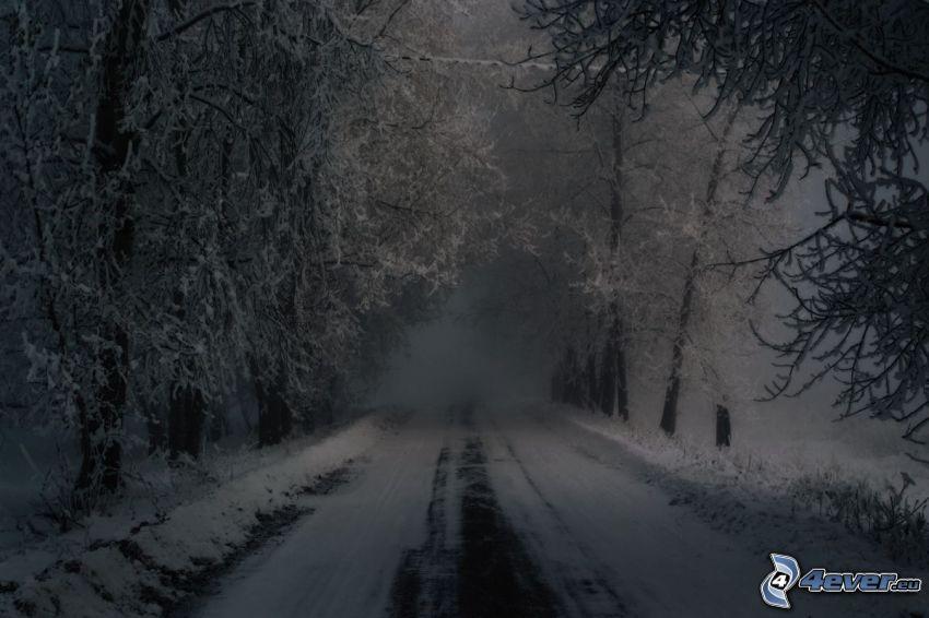 skogsväg, snö, dimma