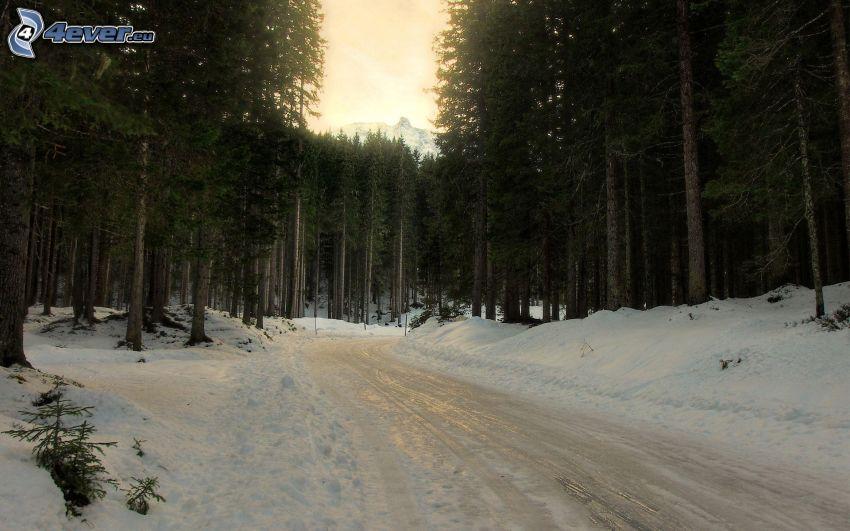 skogsväg, snö, skog