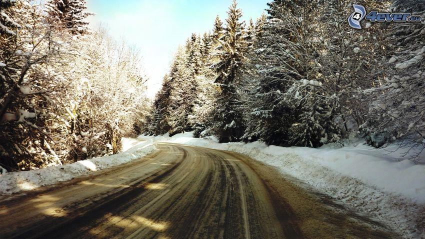 skogsväg, snöig skog