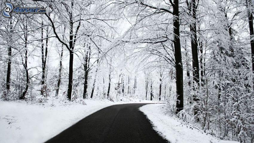 skogsväg, snöklädda träd