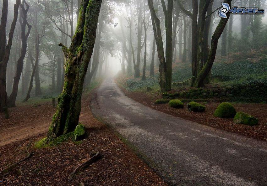 skogsväg, träd, stenar, mossa, dimma