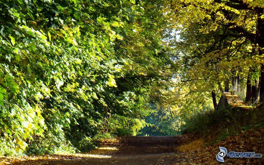 skogsväg, träd