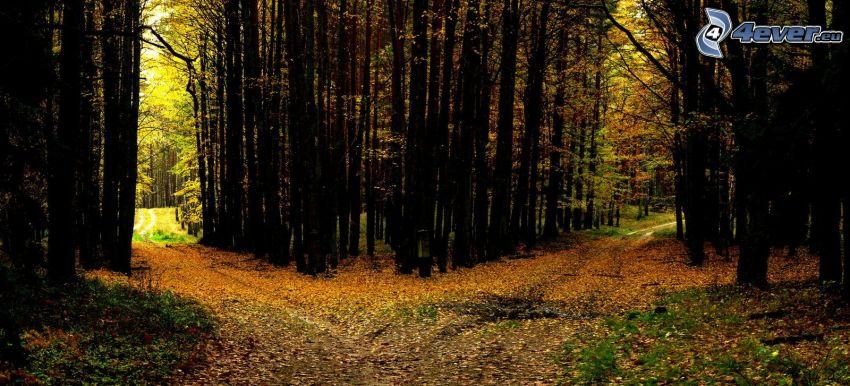 skogsväg, vägkorsning, höstlöv