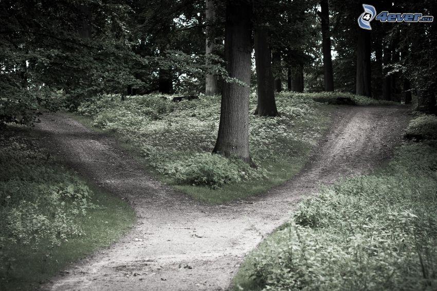 skogsväg, vägkorsning, träd