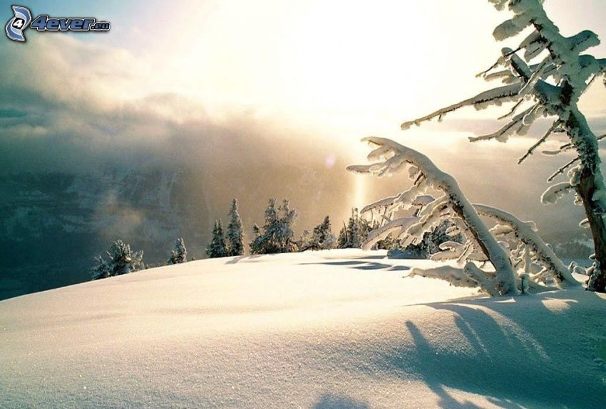 snöig backe, snöklädda träd