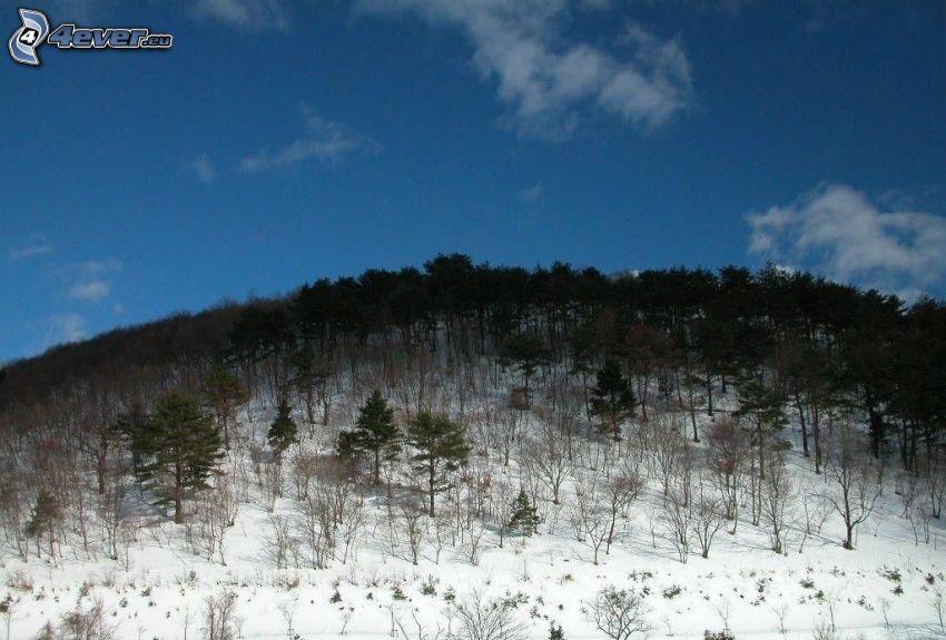 snöig backe, träd