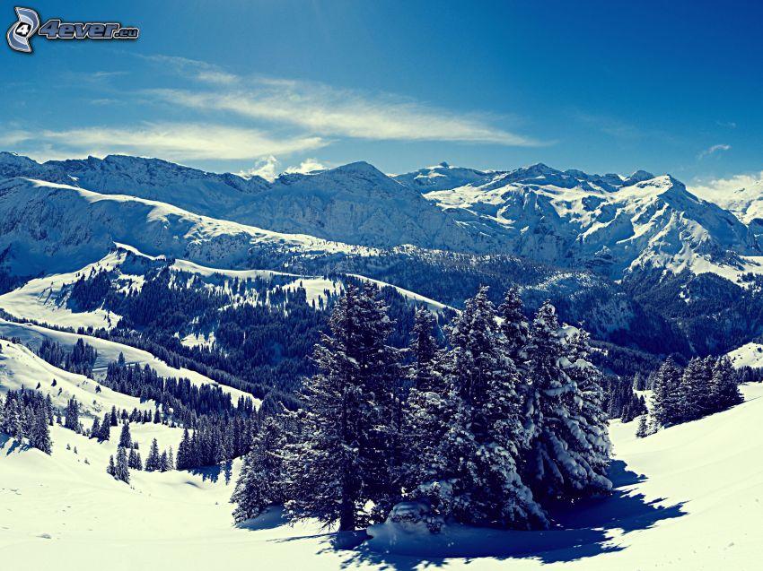 snöig bergskedja, snöklädda träd