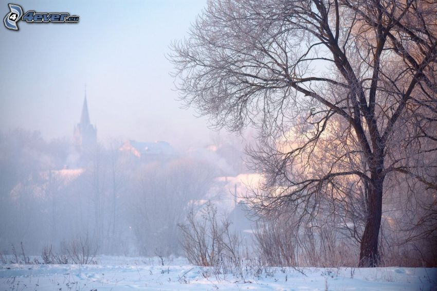 snöig by, spretigt träd
