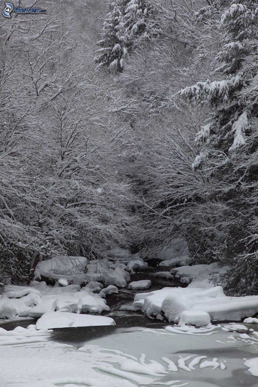 snöig skog, bäck