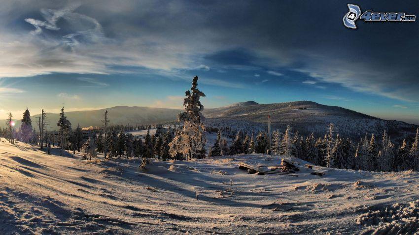 snöig skog, bergskedja, snö